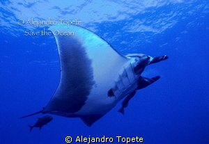 Manta Ray Dance, San Benedicto Mexico by Alejandro Topete 